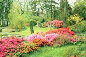 Sådan landskab et blomsterbed