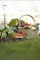 Liste over fælles haven grøntsager