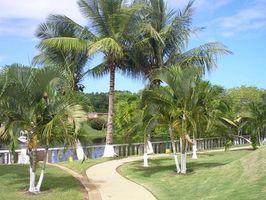 Tropisk palme planter