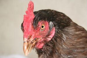 Hvordan til at designe kylling Nesting kasser