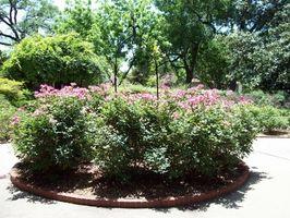 Forskel mellem en busk & en busk