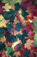 Drejning af blade i efteråret