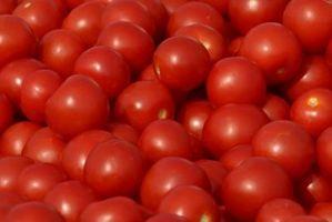 Hvorfor har min drue tomatplanter brune pletter på Tips?