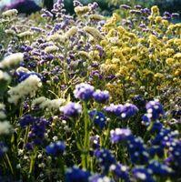 Hvordan man kan tiltrække kolibrier og sommerfugle til din have, landskab