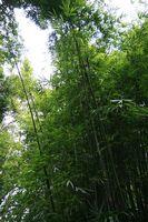 Ideer til bambus vindue behandlinger