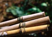 Hvordan man laver en bambus espalier