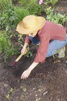 Sådan starter du en have, og hvad materialerne skal bruges
