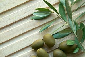 Hvordan til at identificere oliventræer