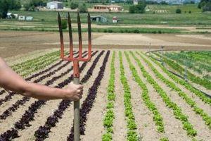 Hvordan du planlægger en foråret køkkenhave