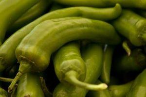 Kunstige Chili peber planter