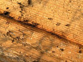 Hvordan til at dræbe myrer i træ bjælker