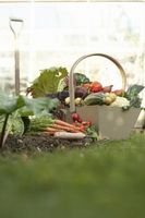 Hvordan til at plante en have ved hjælp af frø