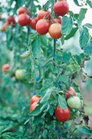 5 køkkenhave Tips til en rigelig høst