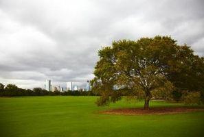 Hvordan til at befrugte græsset spirer
