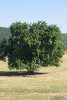 Træ bevaring fakta