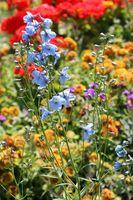 Firkantet Flower Garden ideer