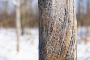 Flyvende insekter at bore huller i træer