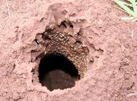 Sådan fjerner termitter fra møbler