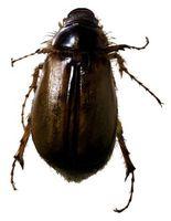 Mest effektive Bug Zappers