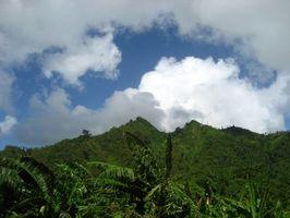 Tropiske jordbundstyper