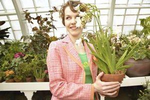 Hvordan man kan dekorere et Terra cotta Flower Pot med bånd