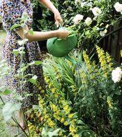 Hvordan til at designe en lille Home Garden