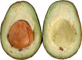 Sådan kan du afgøre, hvornår din Avocado træ vil bære frugt