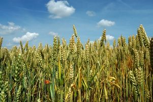 Hvordan herbicider påvirker mennesker