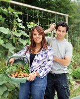 Hvordan man laver Clips til at holde vegetabilske vinstokke