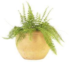 Sådan re Pot en bregne plante med sten