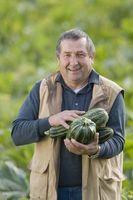 Sådan forbereder Squash frø til plantning