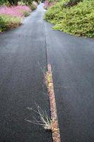 Hvordan man kan dræbe ukrudt vokser gennem asfalt