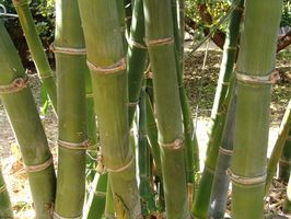 Bambus gulvbelægning holdbarhed