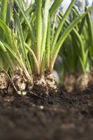 Hvad er forskellene i permeabilitet test til at bestemme jordbundens egenskaber?
