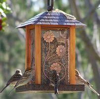 Hvordan man forebygger fuglefrø fra spiring