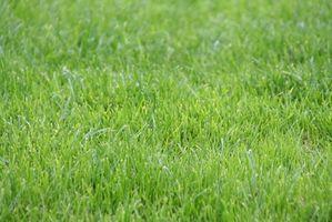 Sådan Sammenlign Zoysia græs