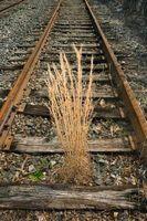 Hvordan man opbygger en Railroad slips plantageejer boks