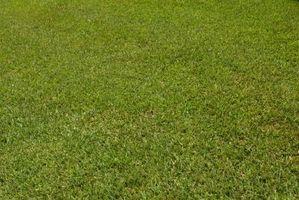 Sådan fordelt diatoméjord på en græsplæne