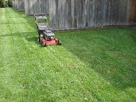 De bedste måder at gøre en lille græsplæne ser godt & lav vedligeholdelse