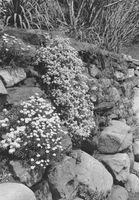 Hvor hen til bagatellisere Erosion på skrånende haver