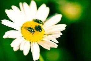 Sådan holder fluer & myg væk