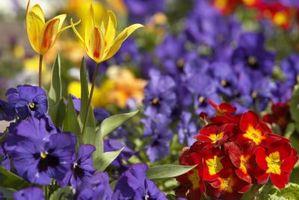 Hvordan til at plante i nærheden af vandrør