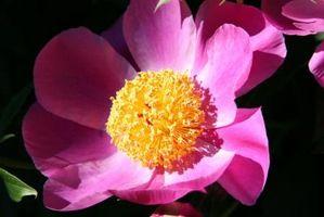 Sådan Decorate med Pink og gul