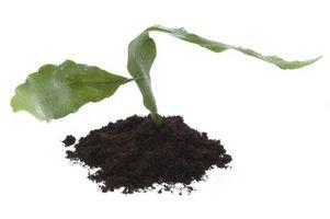 Fælles jord bakterier nematoder