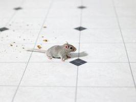 Sådan agn en levende musefælde