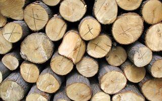 Sådan Grade Paulownia Logs