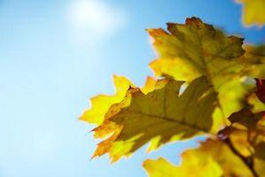 Forskellige former for blade om efteråret projekter
