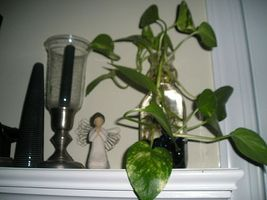 Sådan decorate med stueplanter