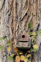 Fælles Birdhouses