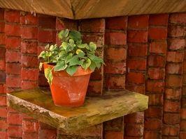 Dekorative ideer til ved hjælp af potteplanter som Centerpieces